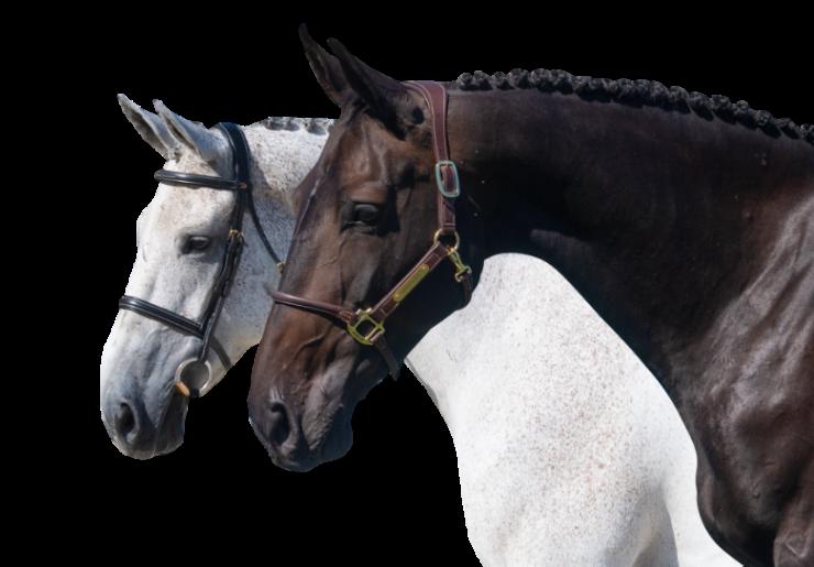 horses_transparent